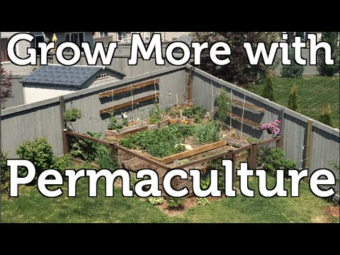 How I use Permaculture Principals to Grow More Food my Small Garden
