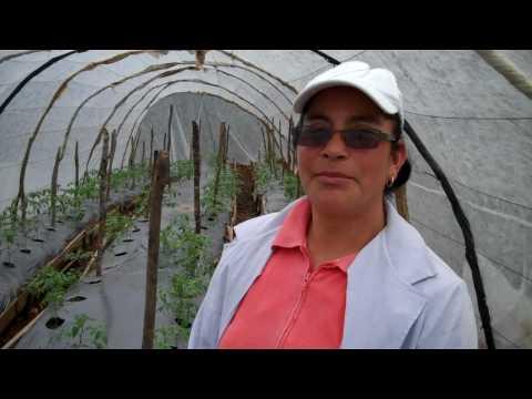 Doña Ovidia Martínez, una emprendedora del cultivo de hortalizas