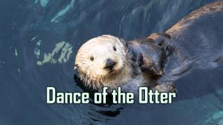Royalty Free :Dance of the Otter