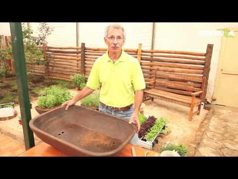 Hidroponia: saiba como montar uma horta em qualquer espaço