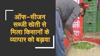 Off-season vegetable farming gives business boost | - ZEENEWS