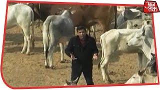यूपी के किसानों को गोमाता से बचाओ! स्पेशल रिपोर्ट - AAJTAKTV