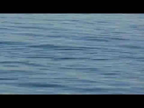 платная рыбалка сочи адлер