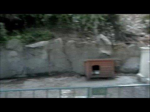 Abandoned Skyway Station of Disneyland
