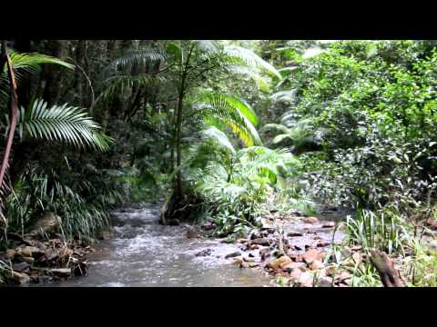 Relaxing Nature Scene: Rainforest stream in ferny National Park