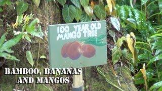 EP3 Road To Hana - Bamboo, Bananas and Mangos - Garden of Eden - Maui, Hawaii