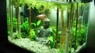 Exceptional Fishtank Evolution: Planted Tank Aquascapes   YouTube