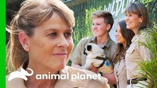 Terri Irwin Carries on Her Late Husband Steve Irwin's Legacy - ANIMALPLANETTV