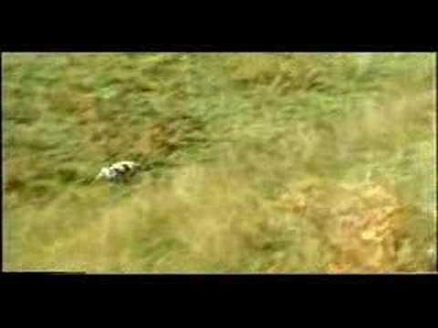 Lone σε Φερμα μπεκατσας - epaniel breton