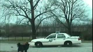 パトカーを襲う犬、フロントバンパを食いちぎる。