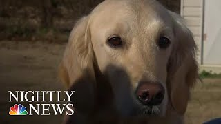Service Dog Receives College Diploma Alongside Owner | NBC Nightly News - NBCNEWS
