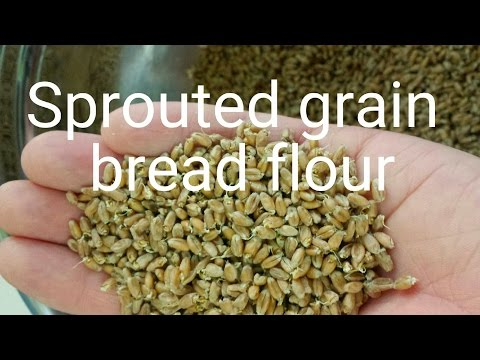 Sprouted grain bread flour how to ( low gluten )