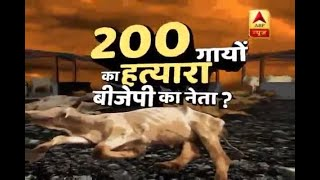 Chhattisgarh: 200 cows die of starvation at shelter run by BJP leader - ABPNEWSTV