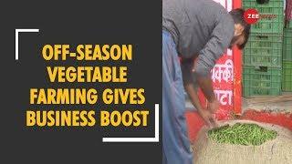 Himachal Pradesh: Off-season vegetable farming gives business boost - ZEENEWS
