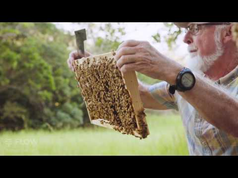 Beek Speak | John Gates - Bee health for beginner beekeepers