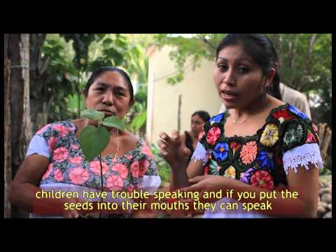 Bee Conservation Project - Saving the Bees in Mexico - Fundacion Melipona Maya