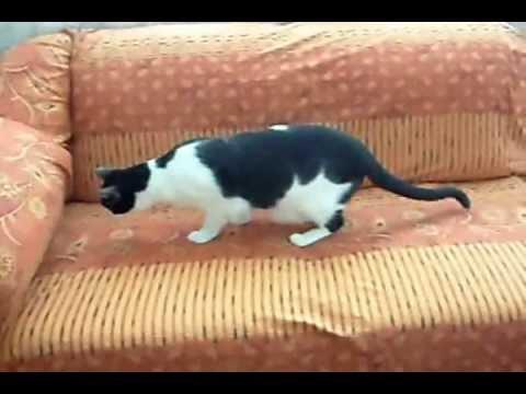 Como hacer un forro para sofa vidoemo emotional video - Como tapizar un sofa ...