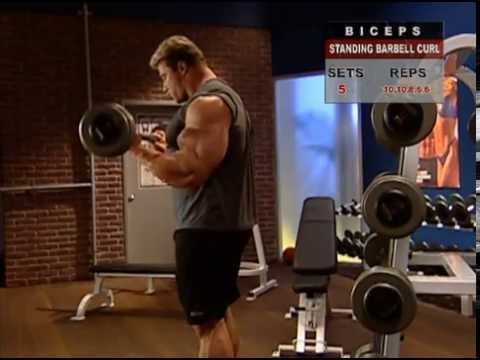 Muscle Fitness Exercises Muscle &