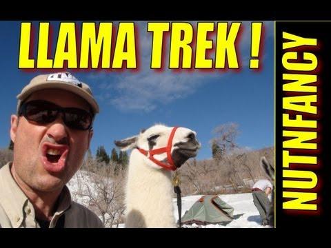 """Llama Trek"" by Nutnfancy"