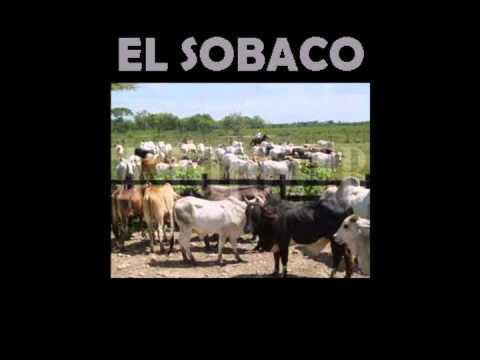 EL SOBACO