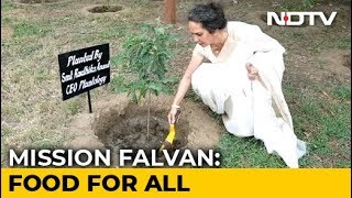How Radhika Anand's Mission Fal-Van Is Increasing India's Green Cover - NDTV