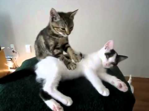 Cat giving a massage