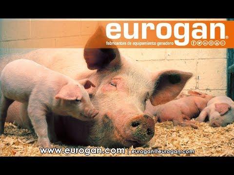 Sala de maternidad en granja de cerdos EUROGAN / Farrowing house (Pig farm)