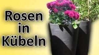rosen richtig in balkon-/terrassen-kübel/blumentöpfe pflanzen, Terrassen deko