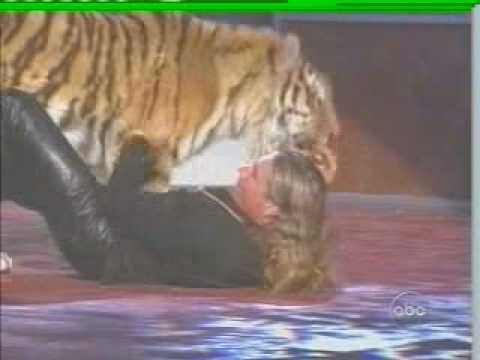 Wild Tiger Attack At Awards Show