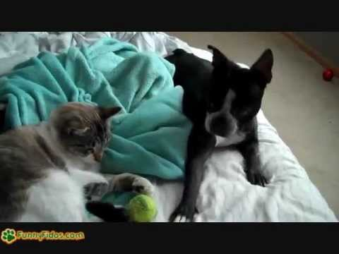 Mačka uplašila psa