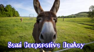 Royalty FreeComedy:Semi Cooperative Donkey