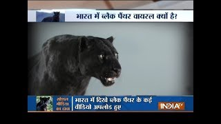 Aaj Ka Viral: Know the truth behind Black Panther in India - INDIATV