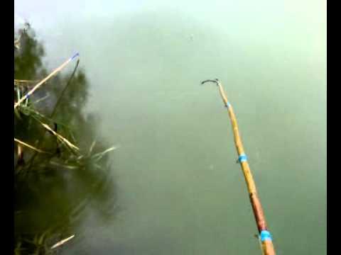 ловля рыбы в селе