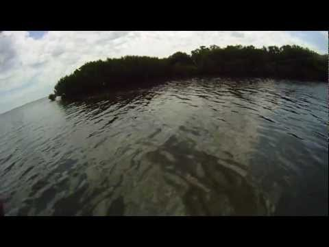 Landing a Good Sized Snook