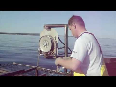 fishing lobster in N.S