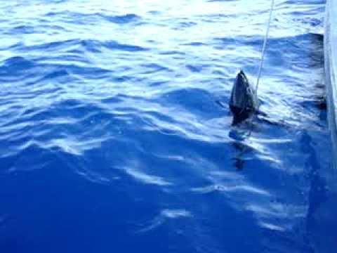 ataque de tubarao em alto mar cenas incriveis