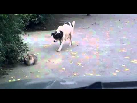 Sneaky dog attacks cat and gets owned