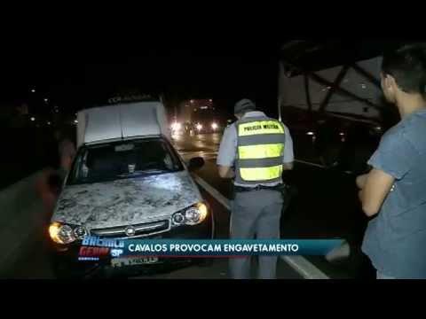 2 cavalos provocam acidente na rodovia Anhanguera