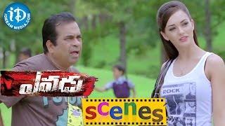 Yevadu Movie Scenes || Brahmanandam & Amy Jackson Comedy Scene || Ram Charan - IDREAMMOVIES