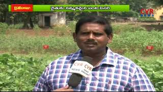 Green Gram Cultivation Information Guide | Mung Beans Farming | CVR News - CVRNEWSOFFICIAL