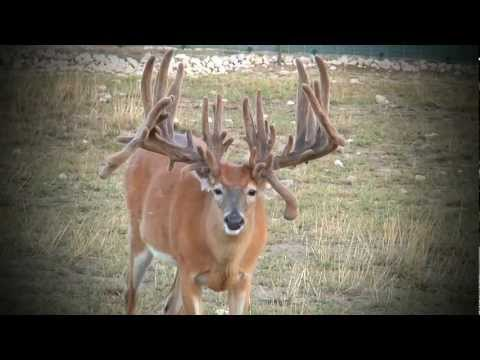 Whitetail Sales Deer Farms | Kevin Grace