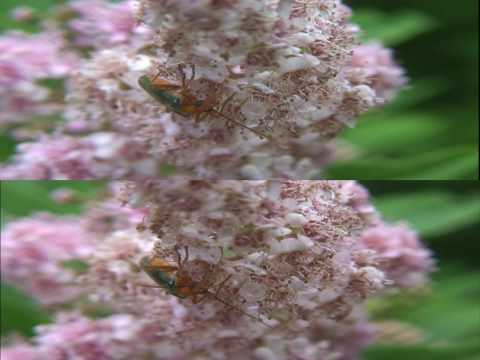 3D Waltz of the Flowers (YouTube 3D HD Test)