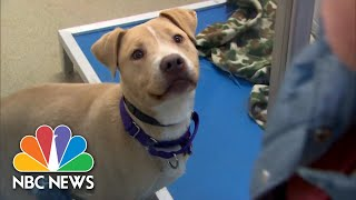 Chocolate, Sleeping In, And Shelter Dogs | NBC News For Universal Kids - NBCNEWS