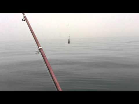 рыбалка в сочи на платниках
