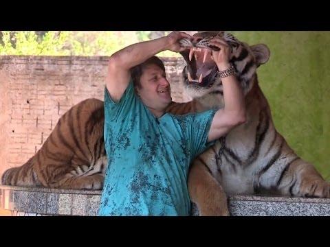 Tigers as pets   ( Tigra si kafshë shtëpiake )
