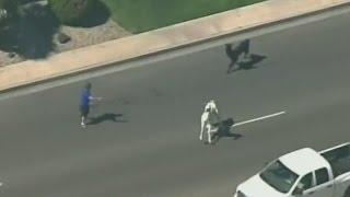 Lasso that llama! - CNN