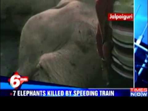 В Индии машинист – лихач сбил товарным поездом семь слонов