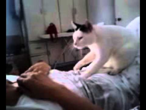 Funny! Cute Cat knows how to massage
