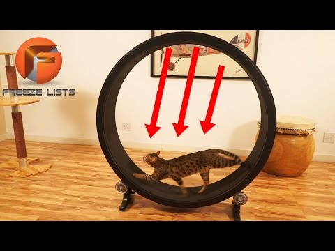 5 INSANE Pet Toys & Gadgets You Must See