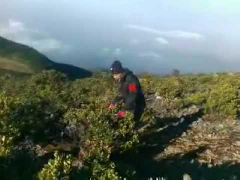 Puncak Gunung Gede Pangrango Sukabumi.3gp